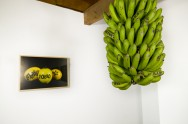 """Friku, Pono, Star"" - photograph of tattooed guavas & ""Wolfpack"", tattooed bananas"